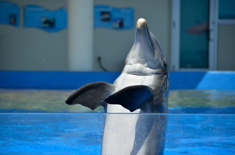 Delphin in einem Aquarium