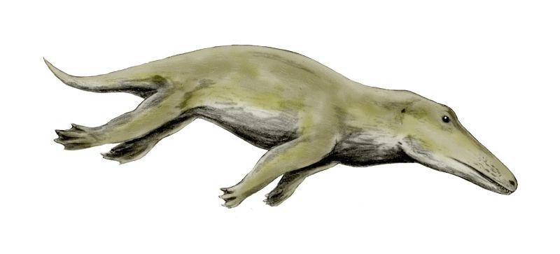 Darstellung des Ambolucetus
