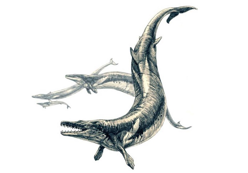 Darstellung des Basilosaurus