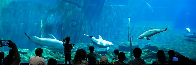 Delfin in Aquarium