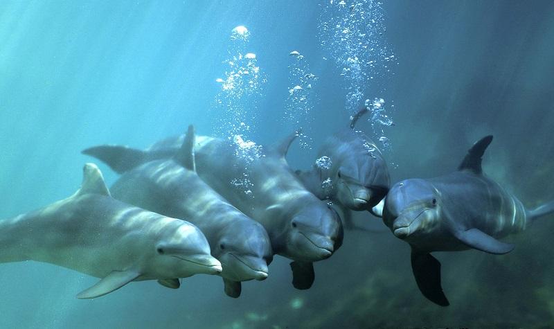 Delfine unter Wasser