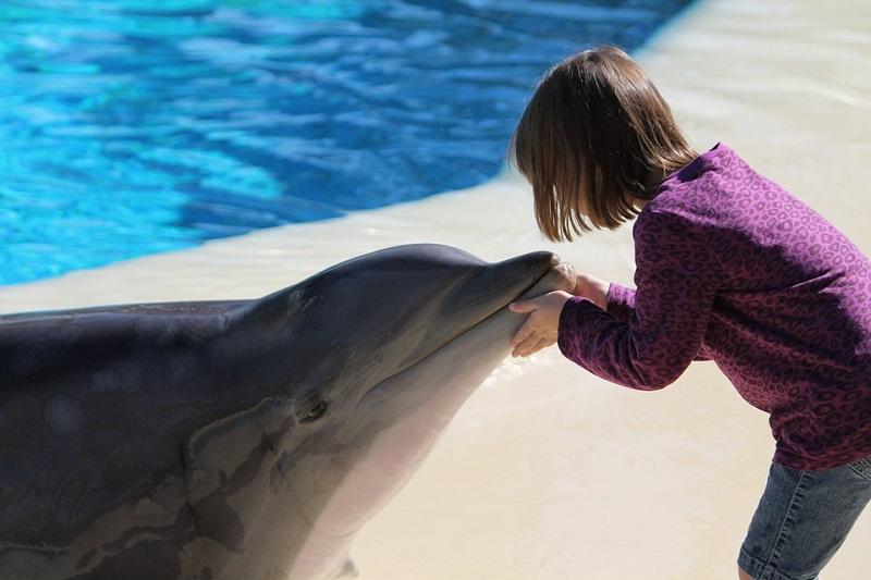 Ein Mädchen und ein Delphin