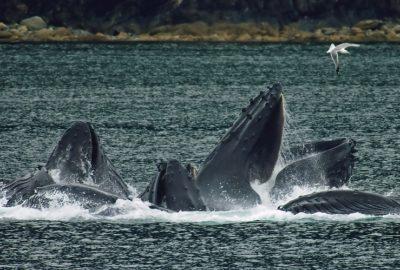 Wale im Wasser