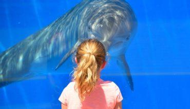 Delfine in der Gefangenschaft